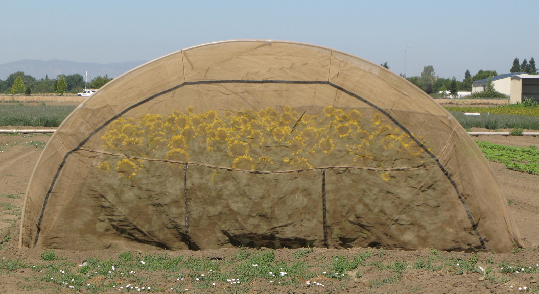 sunflower-tent_ps011